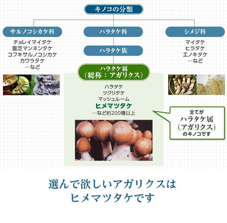 キノコの分類