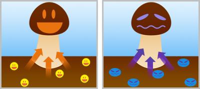 土壌 キノコ
